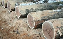 Log Sales